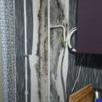 грибок и плесень в квартире