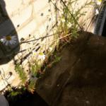 растительность на крыше балкона