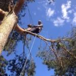 обрезка деревьев в Наро-Фоминске
