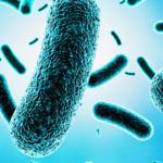 <b>Снова Легионелла. Legionella pneumophila</b>
